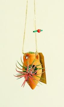 Tillandsia ionantha rood en anfora